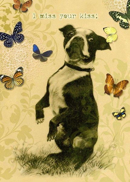 Greeting Card Boston Terrier Dog can be personalized by roxy5235, $3.99