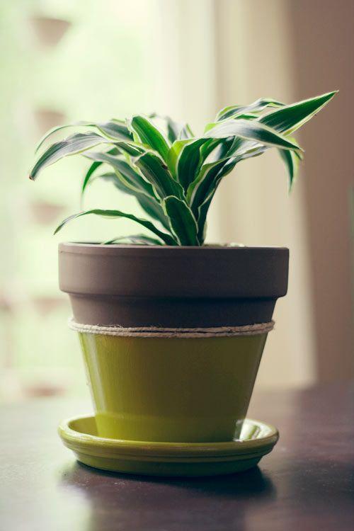 DIY Color Block Terracotta Pot