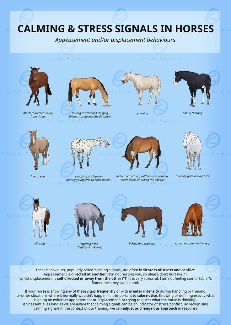 Calming & Stress Signals in Horses