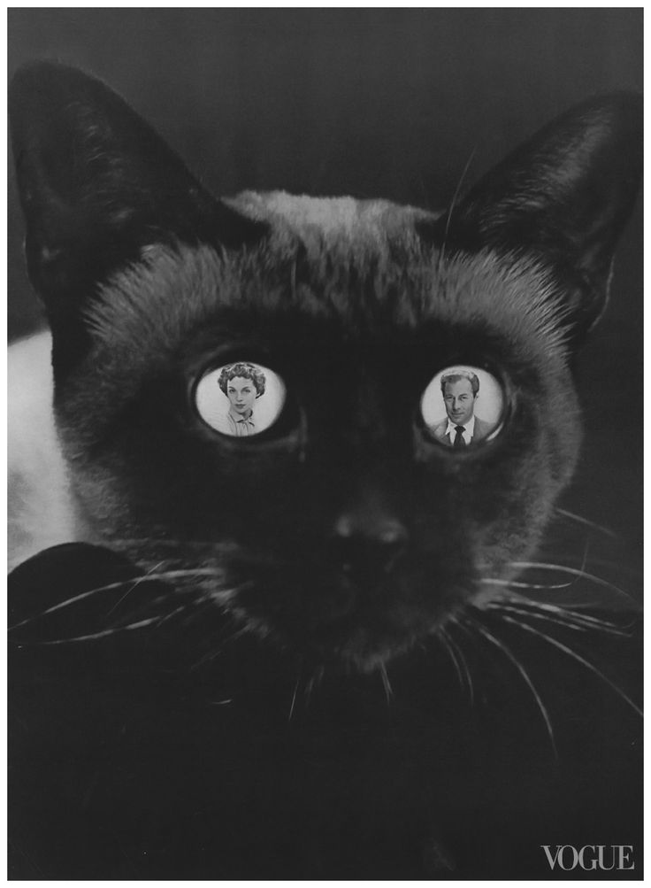 Erwin Blumenfeld, Pictured in the cat's eyes, Lilli Palmer and Rex Harrison, Vogue, November 15, 1950 © The Estate of Erwin Blumenfeld tag: black cat