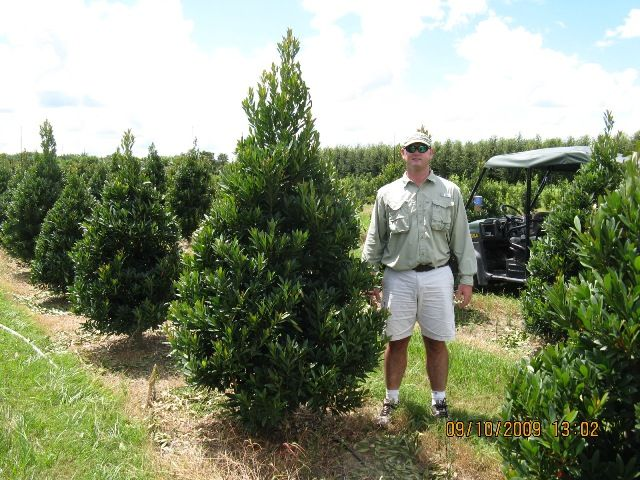 13 best topiaries specialty plants images on pinterest for Fish branch tree farm