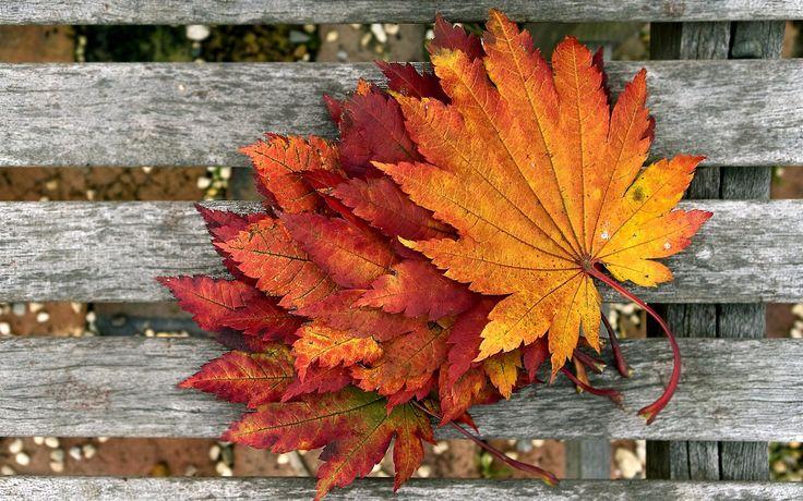 folhas, madeira, outono