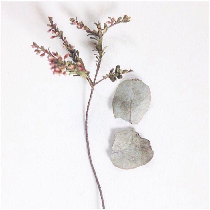 #zerowaste #australiannatives #eucalyptus #flowers #petals #design #minimalism #living #naturalartist #phoebehunter