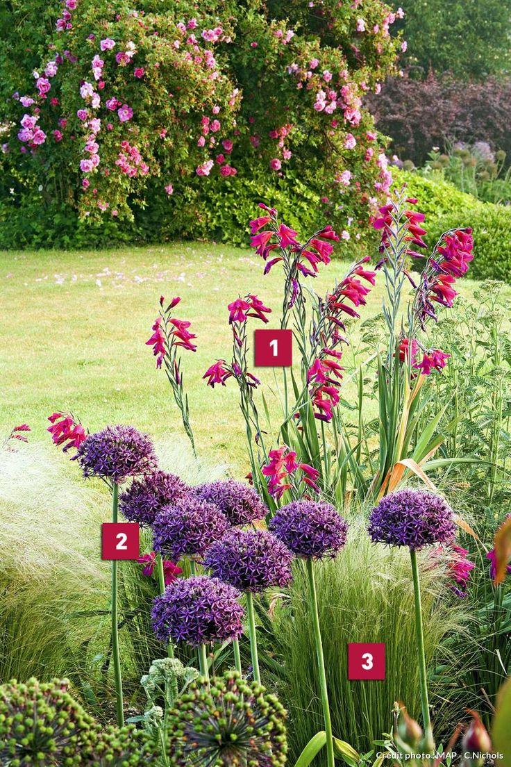 1. Glaïeul (Gladiolus communis bizantinus) 'de Byzance'. 2. Ail décoratif (Allium sp.) . 3. Stipa (Stipa tenuissima).