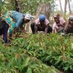 """""""Pour contrôler le marché, Monsanto a privé les agriculteurs des différentes options de culture du coton, forçant ceux qui sont sans moyen pour irriguer à cultiver des graines qui nécessitent l'irrigation"""" http://la-nouvelle-gazette.fr/inde-monsanto-derriere-des-milliers-de-suicides-parmi-les-producteurs-de-coton/13916"""