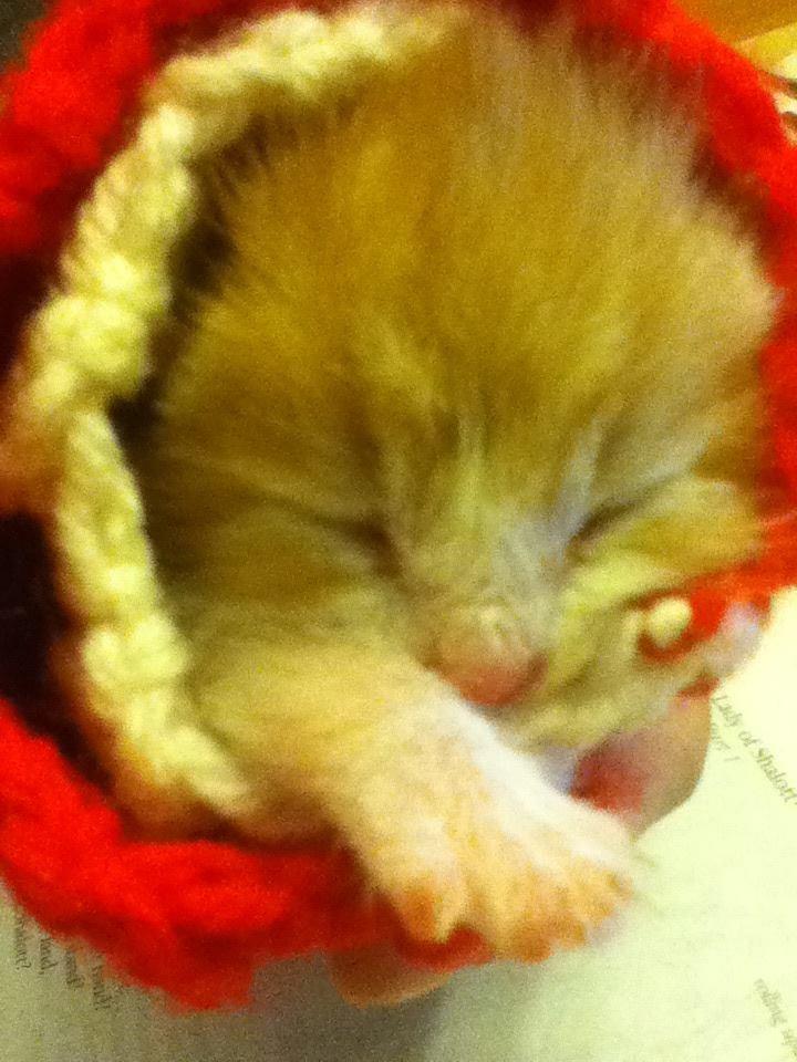 Sleeping kitty burrito!