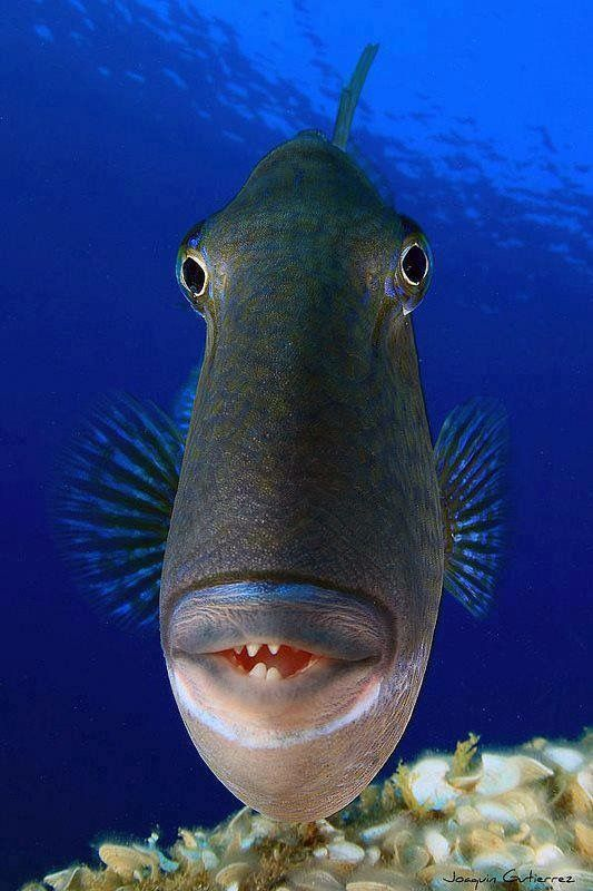 Les 308 meilleures images du tableau fish fish tanks sur pinterest animaux aquatiques et - Comptoir poisson exotique ...