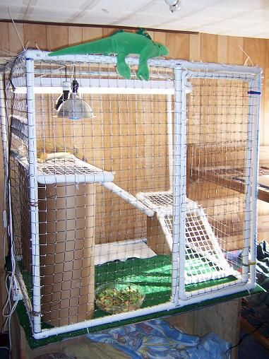Best 20 Iguana Cage Ideas On Pinterest No Signup Required