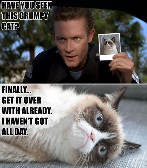 grumpy cat does not - photo #39