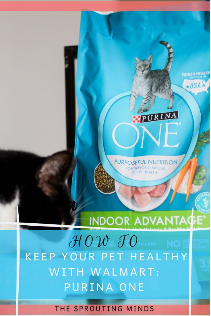 How To Help Your Cat Become Healthier With Walmart Purina One The Sprouting Minds Kitten Food Purina Cat Food Brands