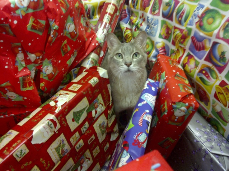 Who brought that Christmas present??