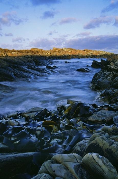 Kelp - Tarkine Wilderness Tasmania | Ambermoon Photography