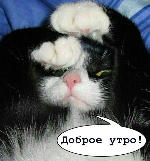 С добрым утром прикольные картинки с кошками с подписями