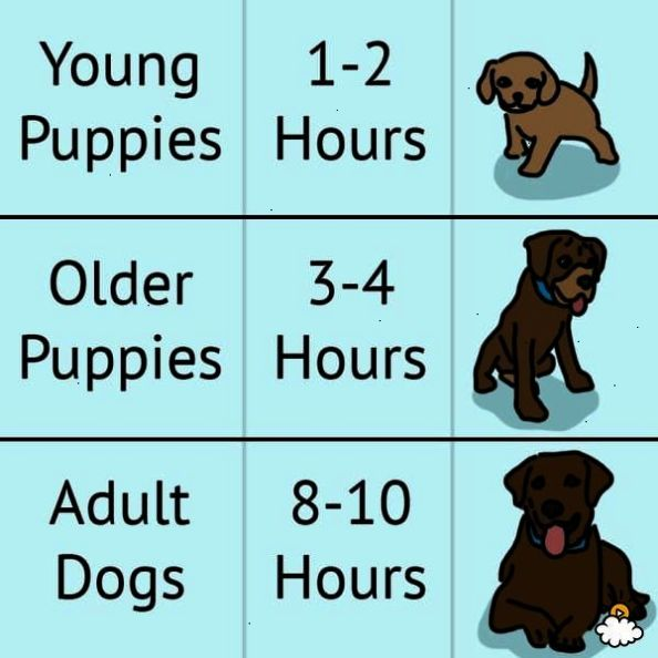 Check This Out Pet Dogs For Free Adoption In Delhi Potty Training Puppy Puppy Potty Training Tips Dog Potty Training