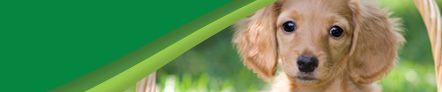 Stützgeschirr Netzstoff schwarz/orange - Führen / Traghilfen - Meiko Heimtierbedarf AG, CH-5612 Villmergen - Alles für den Hundesport und Heimtierbedarf