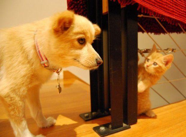Jak pies z kotem? To już nieaktualne - zdjęcie