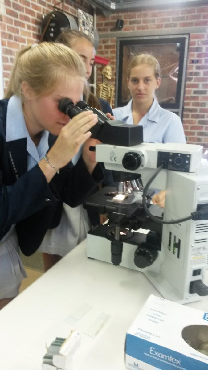 Grade 10 pupil Savannah Huxtable is looking at bull sperm under the microscope for a Grade 10 Life Sciences cell practical.