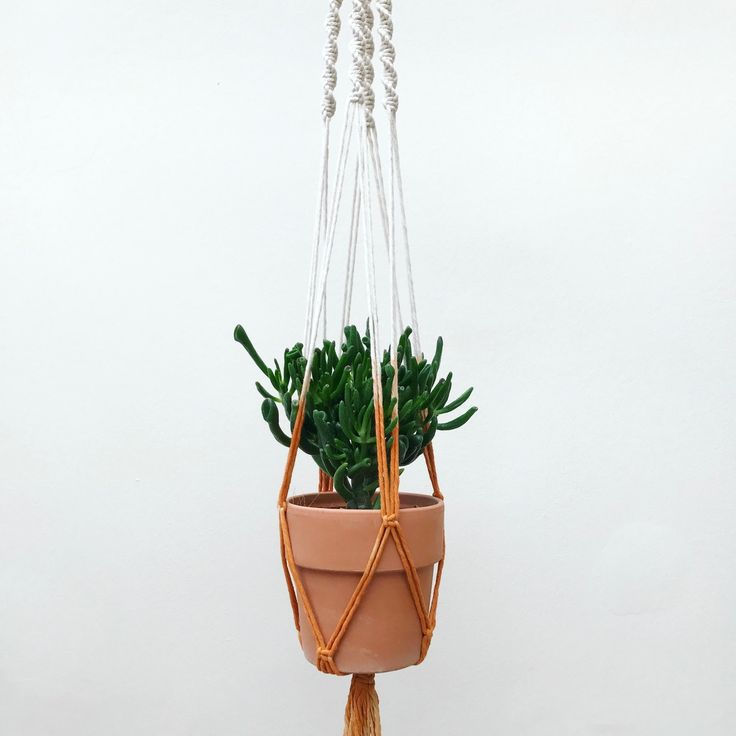 New dip dyed macrame plant hanger by Macrame Adventure