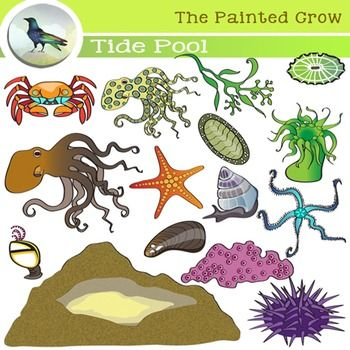 17 Best images about Secondary Science Clip Art on Pinterest ...