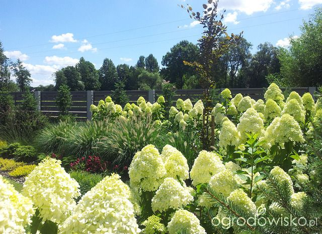 Moja codzienność - ogród Oli - strona 1534 - Forum ogrodnicze - Ogrodowisko