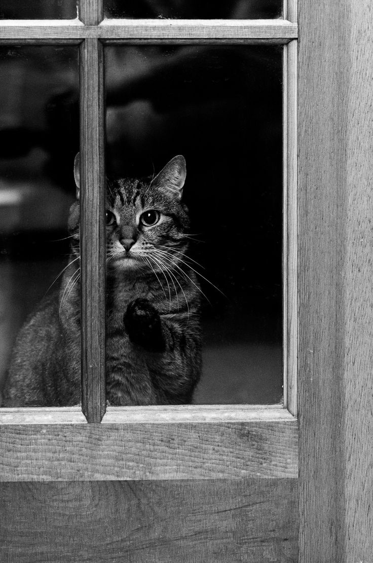 Let me out!   What a sad kitty Amber is, all alone... in a room she can easily exit at any time by other means.