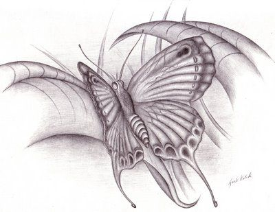 Pencil Drawings of Butterflies   Irek Kotik (Erik): My Creative Skills (Photography, Pencil Drawings)