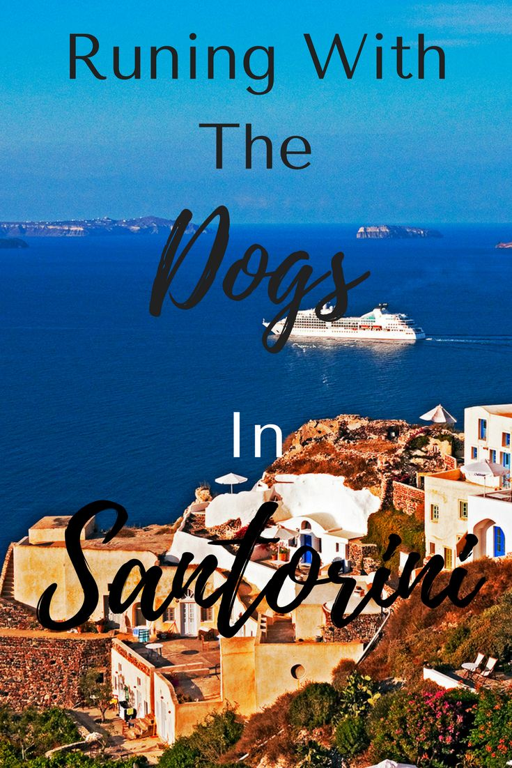 One of the best things I did in the village of Oia, Santorini, Greece was get up early and take a run...with the street dogs! Click through to read about the dogs, the village and what makes this such a special place. #travel #santorini #greece #greekislands #running #greecetravel #europetravel #adventuretravel #wanderyourway