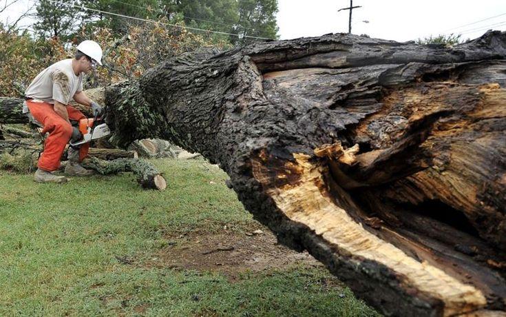 Tree Removal Service Wichita Ks