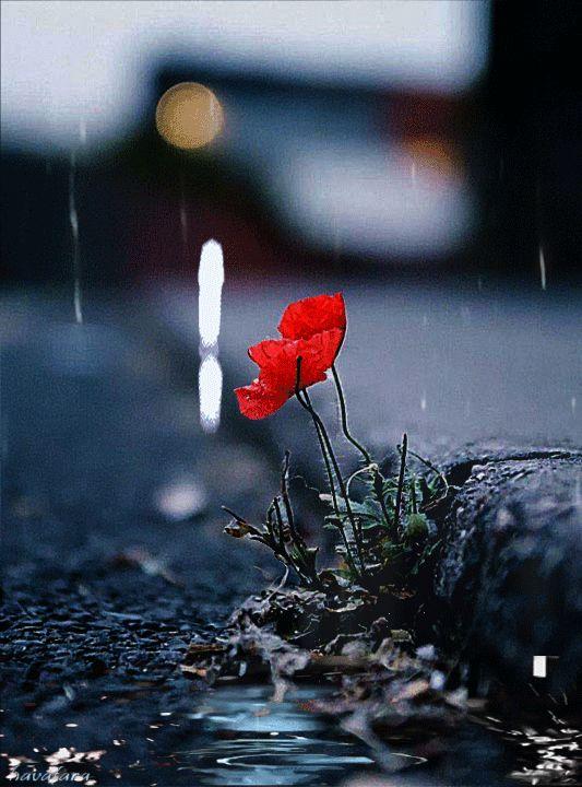 удача, здоровье, грустные цветы фото личность бандит