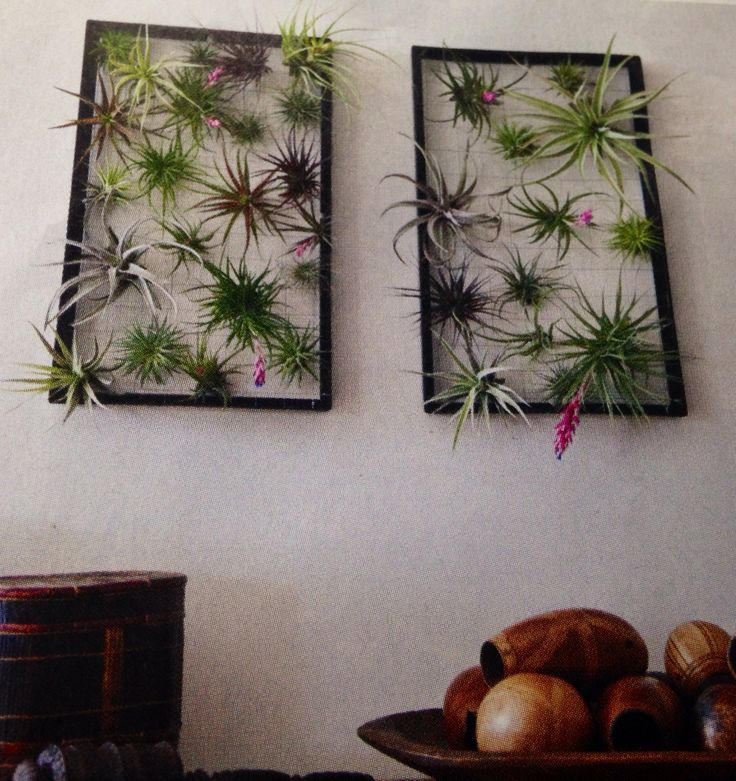 Air plant wall art succulents air plant cactus for Air plant art