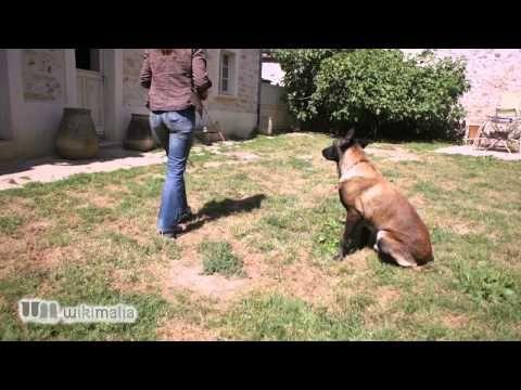 Apprendre à son chien à ne pas bouger par l'éducateur canin Anne Le Gorrec Guérit - YouTube