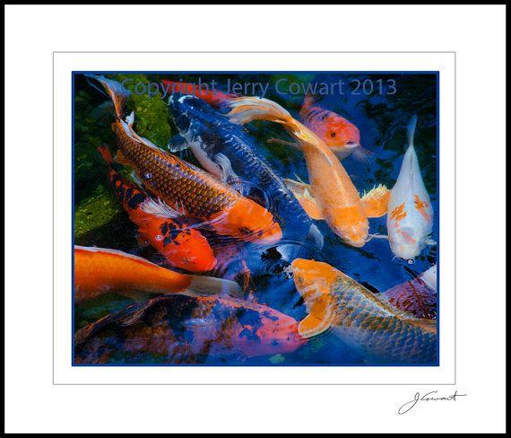 Jerry cowart photography koi fish fine art photograph for Koi pool santa