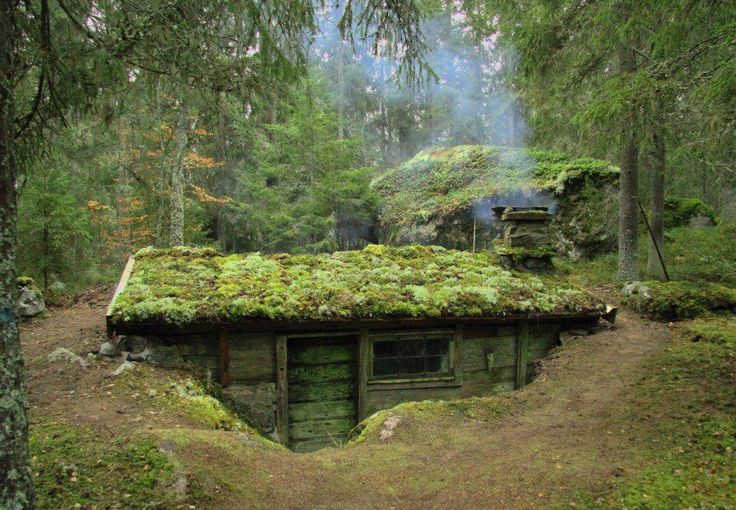 An earth-sheltered home with a moss-covered roof situated in a pine forest.