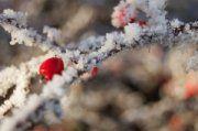 L'inverno è ormai alle porte, e purtroppo la conseguenza tipica sono i malanni da raffreddamento. Per fortuna le essenze naturali combattono efficacemente le infezioni batteriche e virali che sono responsabili di raffreddore e influenza, leniscono i sintomi della tosse e le infiammazioni della gola...  http://www.macrolibrarsi.it/speciali/come-sopravvivere-all-inverno-con-i-profumi-della-natura.php?pn=3148