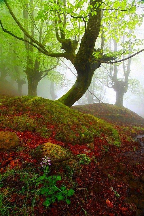 Mystical Forest, Gorbea, Spain photo via ruth