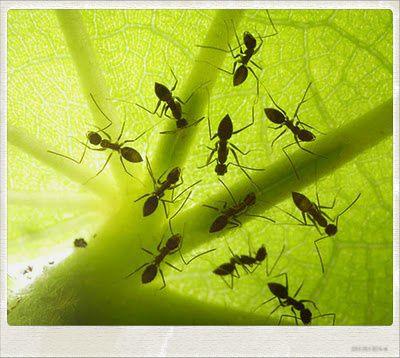 ant at polaroid camera