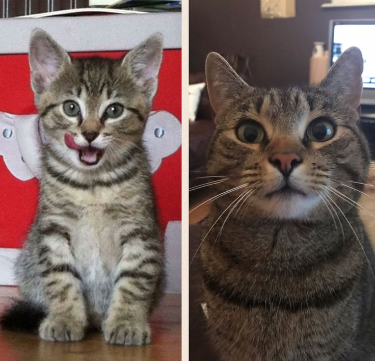 195 Best Just Viral Cats Images On Pinterest