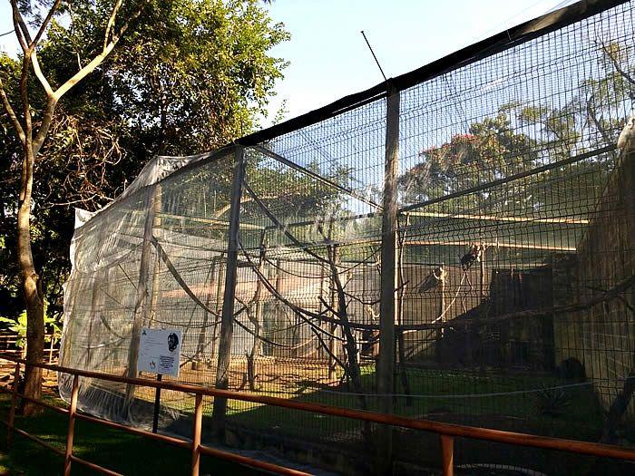 Os macacos-prego do Zoológico Municipal de Piracicaba agora estão protegidos dos mosquitos que podem transmitir a febre amarela