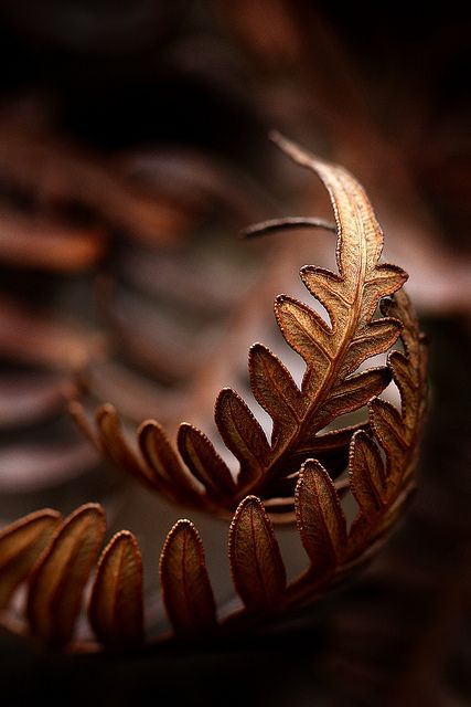 The richness and depth to this photograph of ferns in the Fall takes my breath away!  I