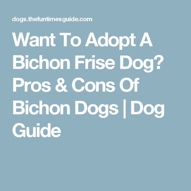 Want To Adopt A Bichon Frise Dog? Pros & Cons Of Bichon Dogs | Dog Guide