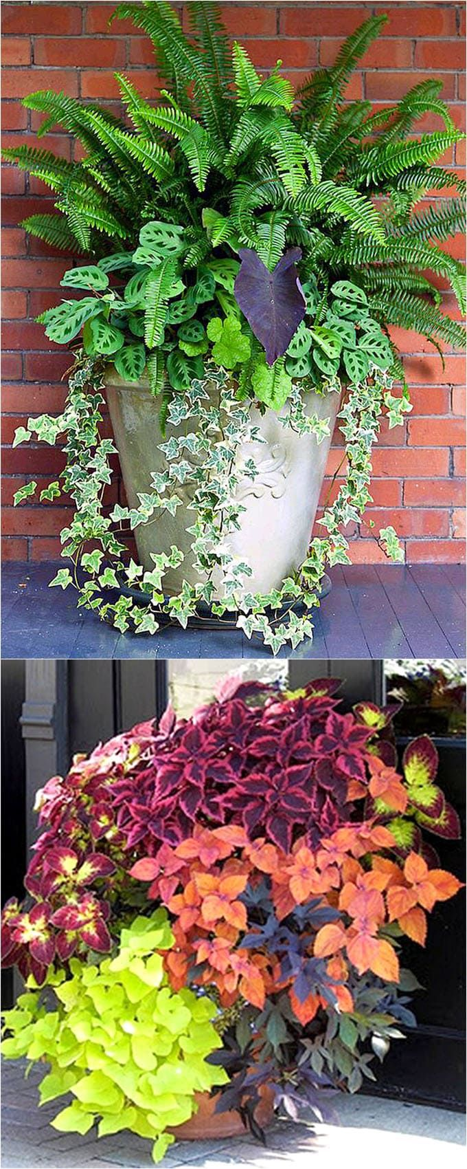 Best Shade Plants & 30+ Gorgeous Container Garden Planting Lists! Showy, colorful and easy care shade plants and container gardens with vibrant foliage and flowers. 30+ designer plant lists to create gorgeous gardens with shade loving plants ! - A Piece Of Rainbow
