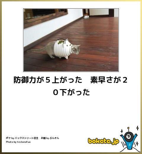 装備 : 笑える!!ネコでぼけてv bokete(猫)まとめ - NAVER まとめ