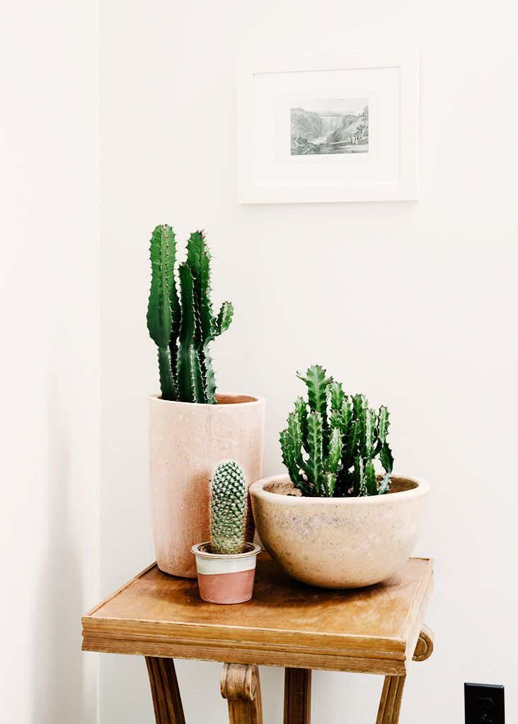 Cacti in clay pots | The Fifth Watches // Minimal meets classic design: www.thefifthwatches.com