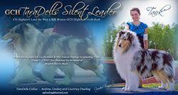 Collie.breeder