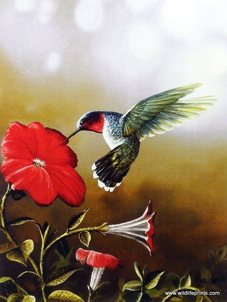 A ruby-throated hummingbird takes nectar from a beautiful red flower. Ruby Throated Hummingbird is available in two different size options.
