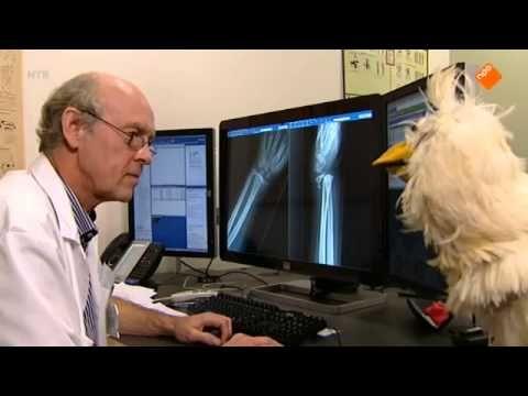 Huisje Boompje Beestje - Het skelet - 22-01-2014 - YouTube