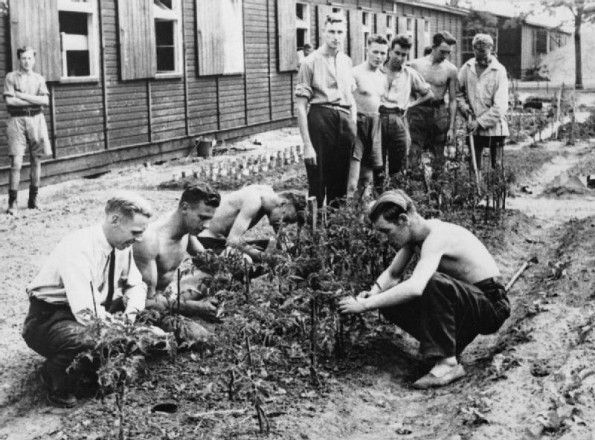 Everyday Life At Stalag Luft Iii Prisoner Of War Camp, Sagan, Germany. British prisoners of war tend their garden at Stalag Luft III.