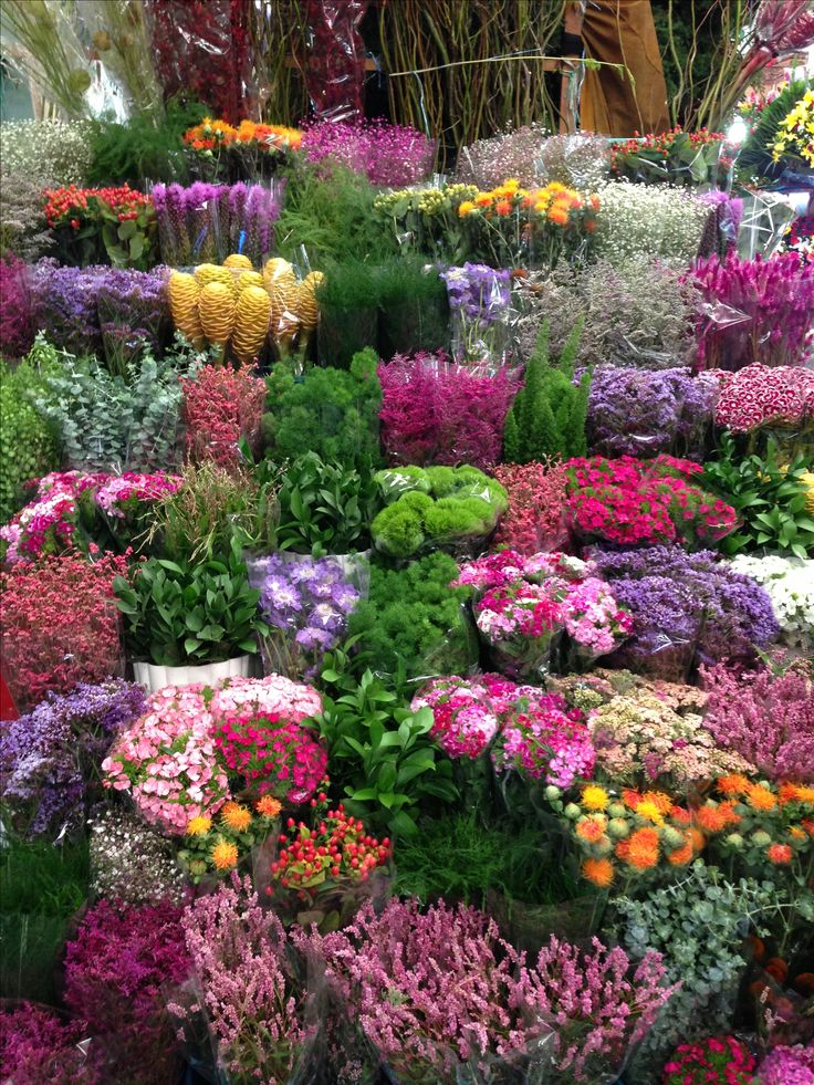 Mercado de Jamaica Mexico City. One of my favorite places ion the world!! So many flowers!!