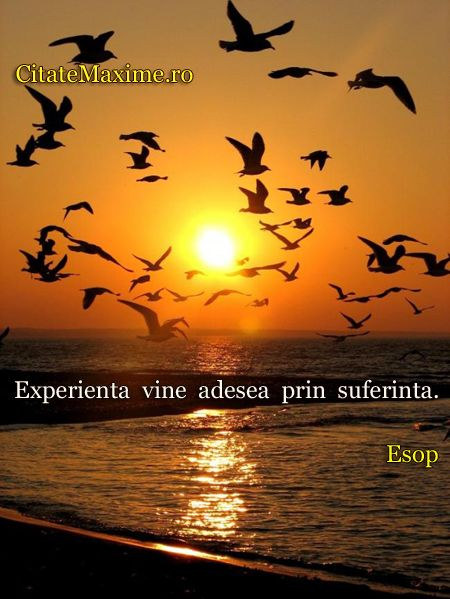 """""""Experienta vine adesea prin suferinta."""" #CitatImagine de Esop Iti place acest #citat? ♥Distribuie♥ mai departe catre prietenii tai. #Citate..."""