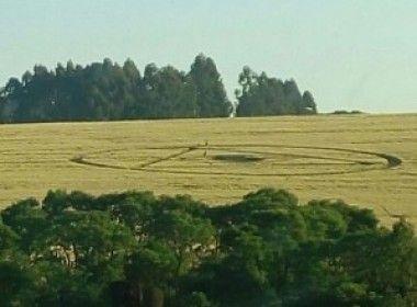 Novo agroglifo surge em Ipuaçu neste sábado mas é destruído Proprietário das terras deu ordens para destruir imediatamente o sinal, mas houve tempo de registrar o fenômeno; confira na galeria de imagens   Leia mais: http://ufo.com.br/noticias/novo-agroglifo-surge-em-ipuacu-neste-sabado-mas-e-destruido/  CRÉDITO: MARCELO FRANZOSI  #Agroglifo #cropCircle #Ipuaçu #SantaCatarina #Desenho #Plantação